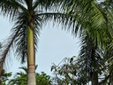 Toucan - tree