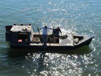 Oyster Harvest, Apalachicola Bay